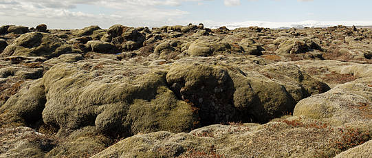 Moss-grown rocks.