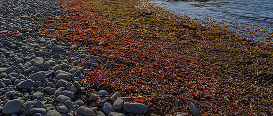 Stony shore with colorful, alluvial seagrass.